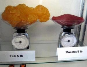 Muscle Does Weigh More Than Fat